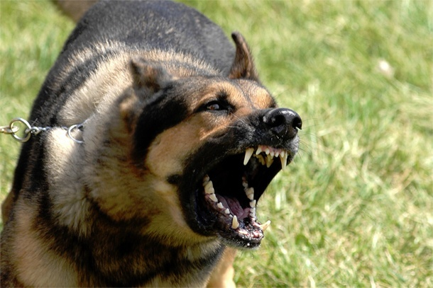 Controlling Dog to Dog Aggression