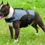 weight_vest_for_dogs