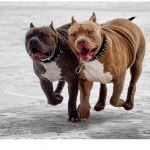 Dog Supplements Muscle Building Vitamins For Canines