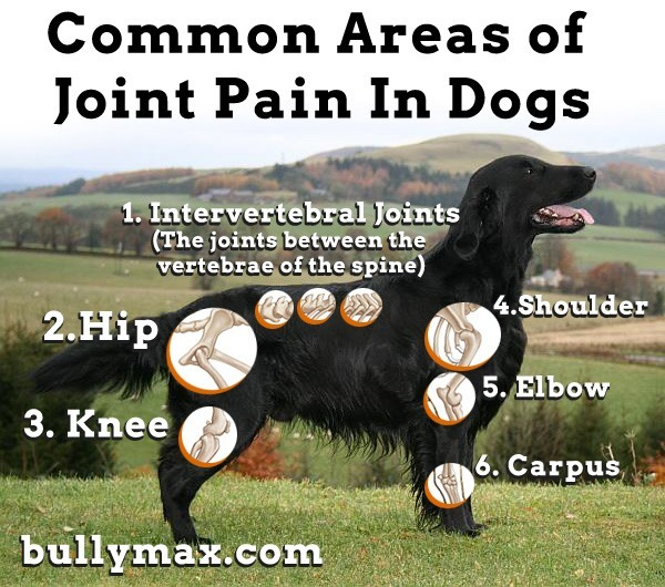 These are the most common areas of joint pain in dogs.