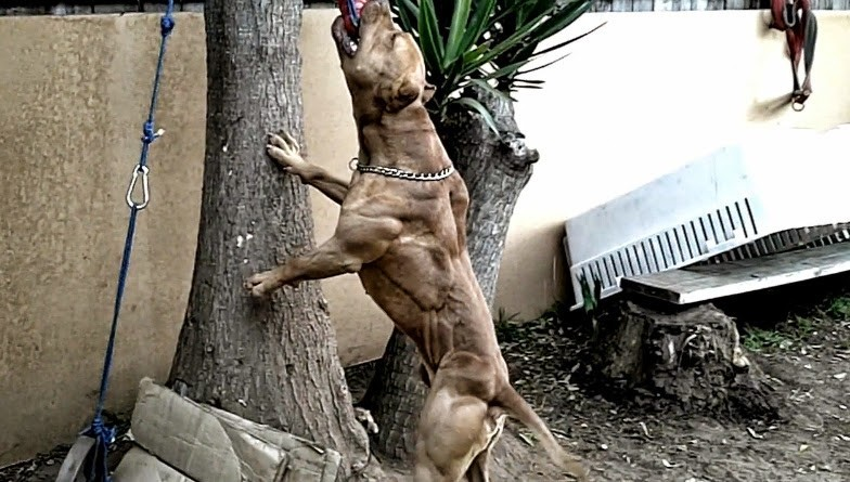 Natural Muscle Building Food For Dogs