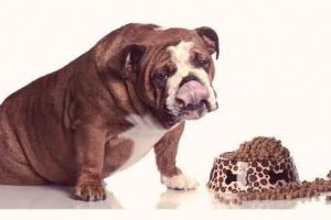Benefits of Grain Free Dog Food